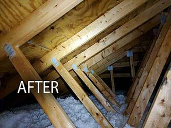 mold in attic after picture