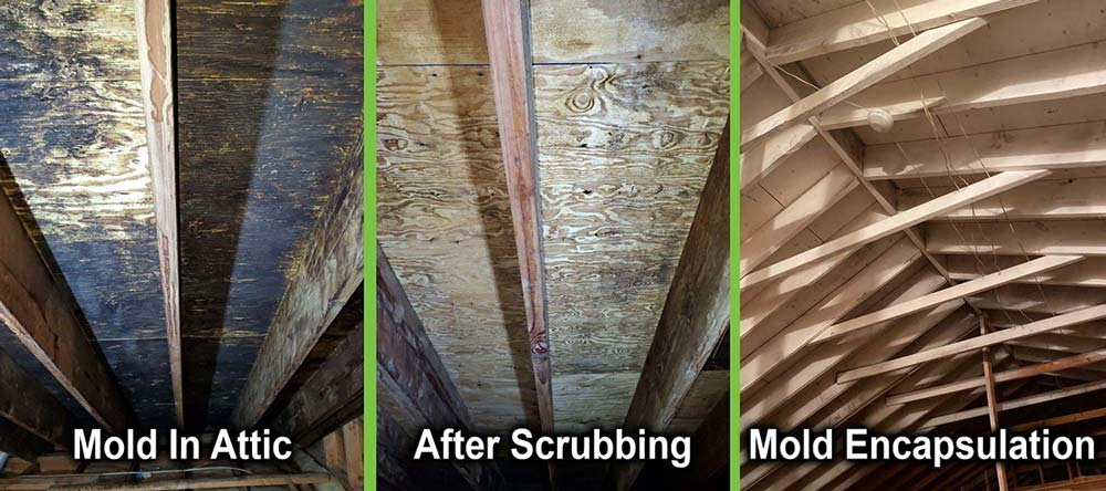 mold before and mold after
