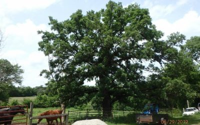 How Trees Could Save the Climate, Peak in the Heat, Korean BBQ Chicken Thighs