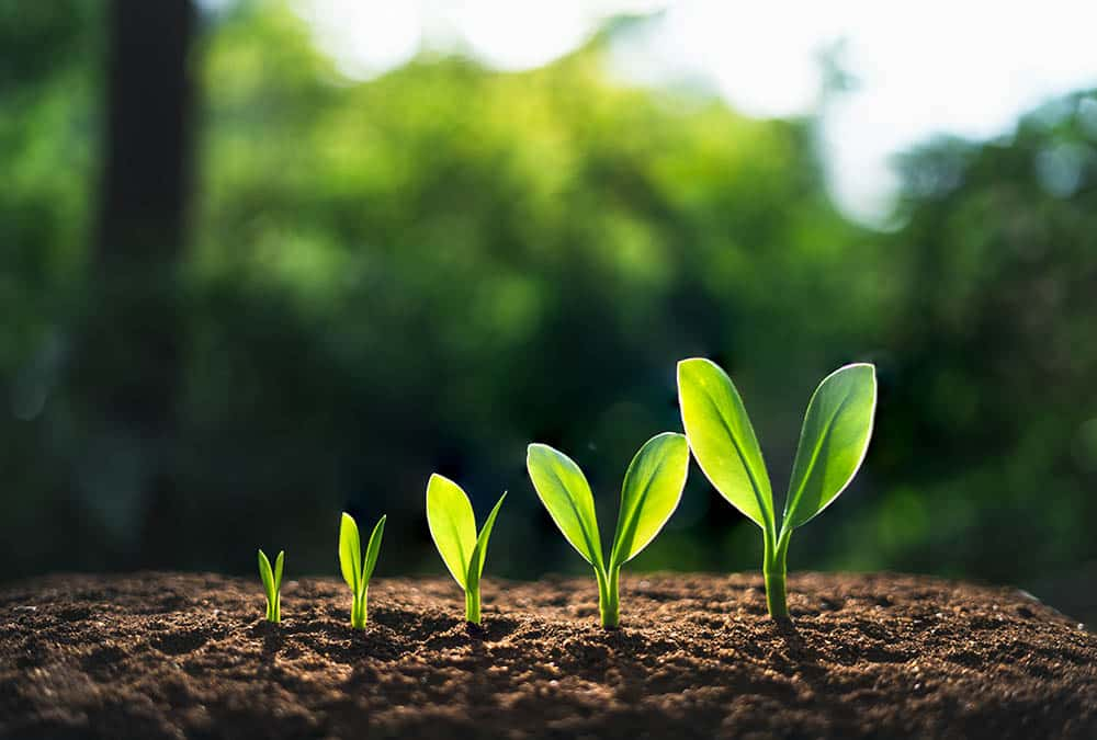 How to Achieve Organic Growth in a Private Equity-Owned Business