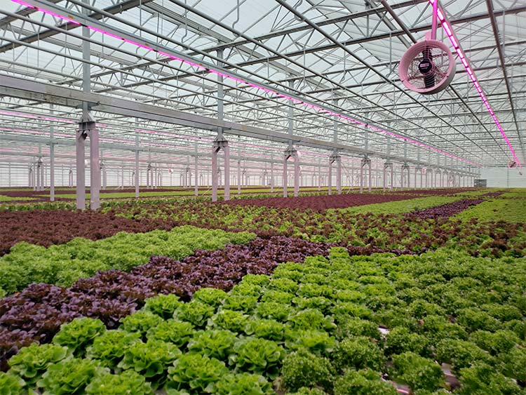 Great Lakes Growers new greenhouse