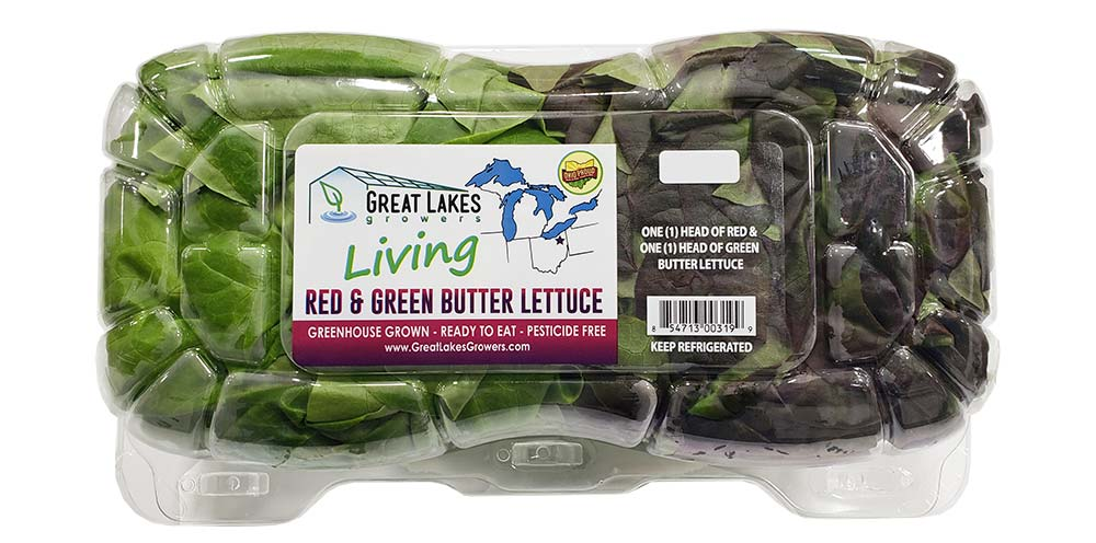 Double Clam Living Lettuce by Great Lakes Growers