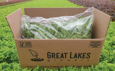 Great Lakes Growers Fresh Cut Arugula