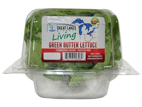 green butter living lettuce by Great Lakes Growers