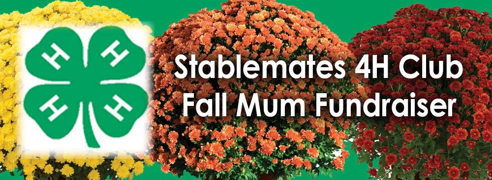 Stablemates 4H Fall Mum Fundraiser