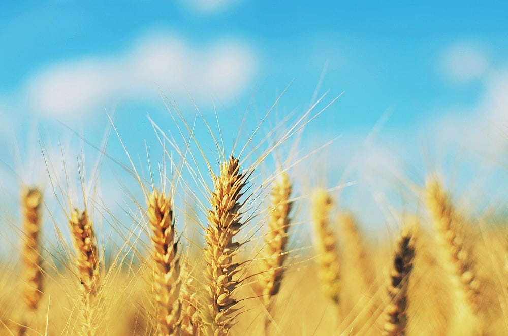 Harvest and Communication